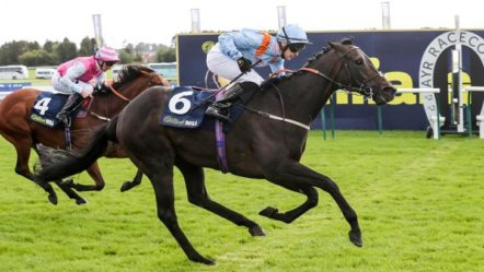 THE BEST HORSE WINS:  How to Win in Horse Betting