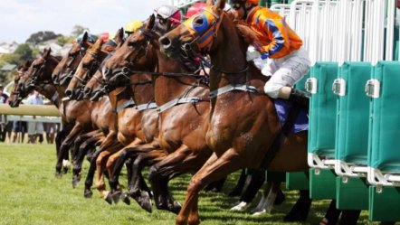 Horse Race Training to resume in New Zealand next week
