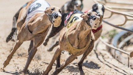 UK Greyhound racing to return on June