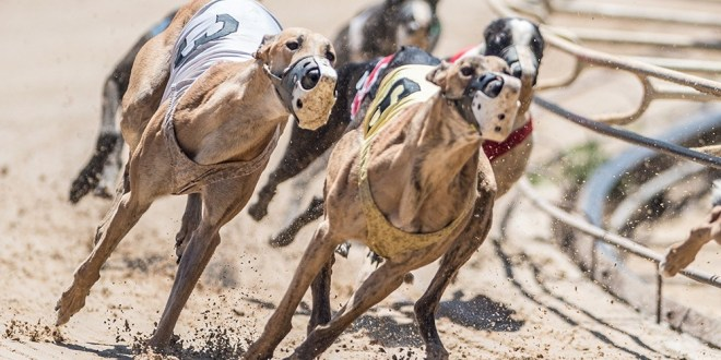 UK Greyhound racing to return on June