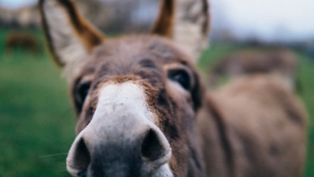 Pakistan Donkey Arrested for Involvement in Illegal Gambling